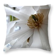 Star Magnolia Throw Pillow