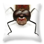 Staring At Red Dragonfly Throw Pillow