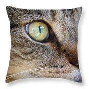 Staring Cat Throw Pillow
