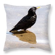 Starling Paddling Throw Pillow