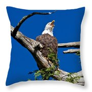 Squawking Alaskan Eagle Throw Pillow