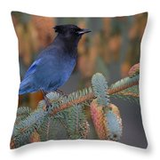 Stellar Jay, Haines, Alaska Throw Pillow