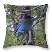 Stellar's Jay In Profile Throw Pillow