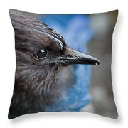 Stellars Jay Up Close And Personal Throw Pillow