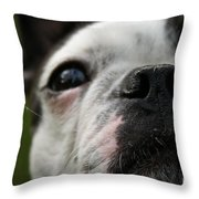 Stella's Close Up Throw Pillow
