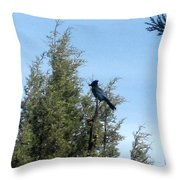 Steller's Jay 2 Throw Pillow