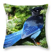 Stellers Jay 2 Throw Pillow