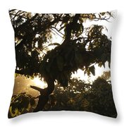 Stem And Leaves Outlined By The Shine Of Sunrays Throw Pillow
