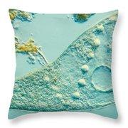 Stentor Coeruleus Throw Pillow