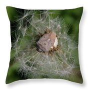 Stink Bug On Dandelion Seed Head Throw Pillow