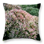 Stonecrop Throw Pillow