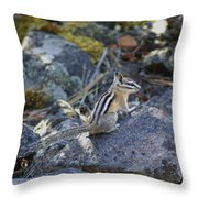 Straight Tailed Chipmunk On A Rock Throw Pillow