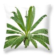 Strange Banana Tree Throw Pillow