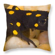 Strauchs Spotted Newt Throw Pillow