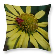 Strawberry Moth On A Yellow Flower Throw Pillow