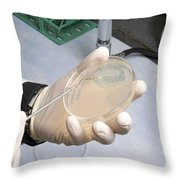 Streaking A Dish Throw Pillow