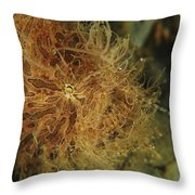 Striated Frogfish, North Sulawesi Throw Pillow