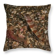 Striated Goby And Blind Shrimp, North Throw Pillow