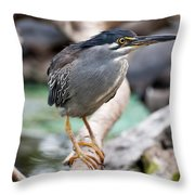 Striated Heron Throw Pillow