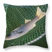 Striped Bass In Net.  The Fish Throw Pillow