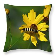 Striped Bee On Wildflower Throw Pillow