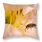 Striped Beetle On Lilly 1 Throw Pillow
