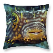 Striped Burrfish On Caribbean Reef Throw Pillow