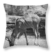 Striped Deer In Black And White Throw Pillow
