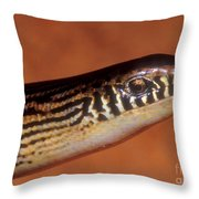 Striped Lateral Fold Lizard Throw Pillow