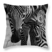 Stripes - Zebra Throw Pillow