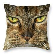 Stubbs 1 Throw Pillow