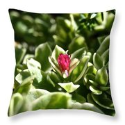 Succulent's Ruby Throw Pillow