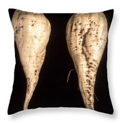 Sugar Beet Breeding Throw Pillow