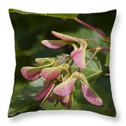 Sugar Maple Acer Saccharum Seed Pods Throw Pillow