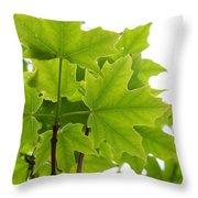 Sugar Maple Leaves Throw Pillow