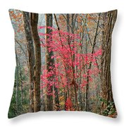Sumac In Morning Light At Cumberland Falls State Park Throw Pillow