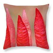 Sumac Leaves Rhus Coriaria In Fall Throw Pillow by Mike Grandmailson