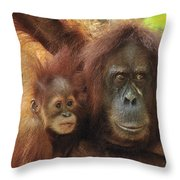 Sumatran Orangutan Pongo Abelii Mother Throw Pillow