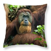 Sumatran Orangutan Pongo Abelii Throw Pillow