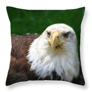 Summer Bald Eagle  Throw Pillow