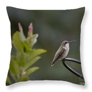 Summer In The South Throw Pillow