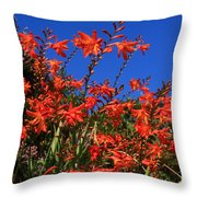 Montbretia, Summer Wildflowers Throw Pillow