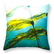 Sun Shines Through Bull Kelp Throw Pillow