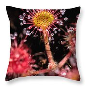 Sundew, Vancouver Island, British Throw Pillow