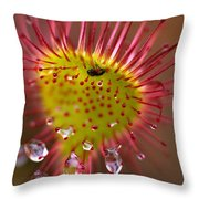 Sundew With Digested Food, British Throw Pillow