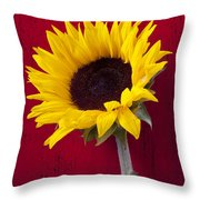 Sunflower Against Red Wooden Wall Throw Pillow by Garry Gay