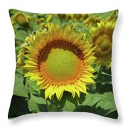 Sunflower And Honeybee July Two K O Nine Throw Pillow