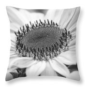 Sunflower Bloom Black And White Throw Pillow