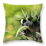 Sunflower Bud Throw Pillow