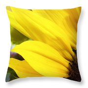 Sunflower Closeup In Landscape Throw Pillow